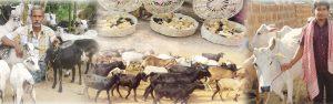 Animal Husbandry in Odisha